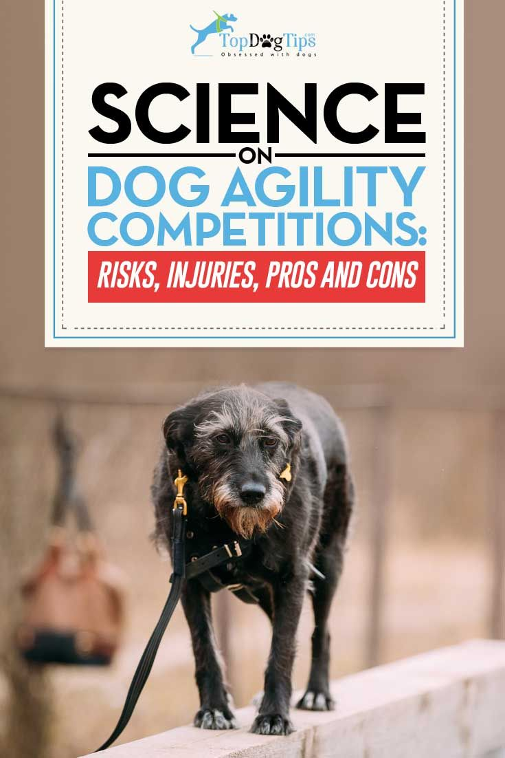 Dog Agility Competitions: How to Start, Science on Risks, Pros & Cons. Getting your pooch into dog agility competitions can be a great way for you and your pet to bond and exercise together. Agility dogs are hard-working, sporty, and very attentive to what their owners want them to do, and with this sport, communication is key. #dogs #science #agility #competitions #working #canines #athletics #training #pets #animals #best