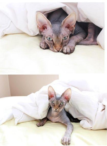 benefits of having a cat