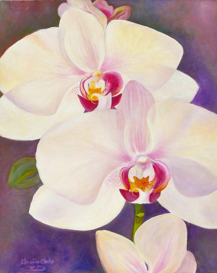 simple orchids paintings - 736×926