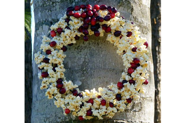 This DIY bird feeder wreath is a simple twist on an old classic. Birds like blue jays and mockingbirds will love feasting on the popcorn and cranberries.