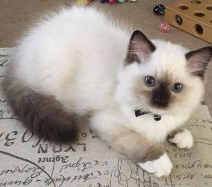 Beautiful Cat Kittens Cutest Cute Cats Cute Cats Kittens