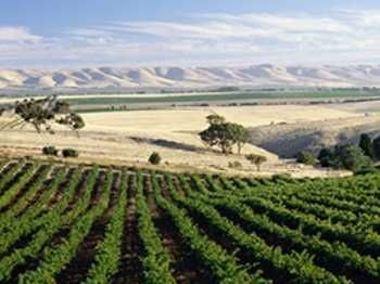 Full Day McLaren Vale Winery Experience - DAYD Excursions in Adelaide, SA