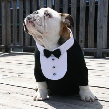 Formal Dog Tuxedo Bib with White Collar and Black Satin Bowtie