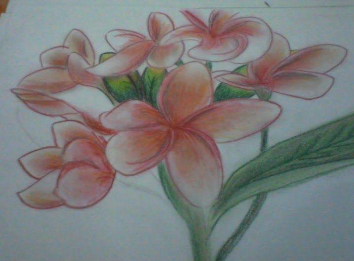 Mewarnai Bunga Kamboja