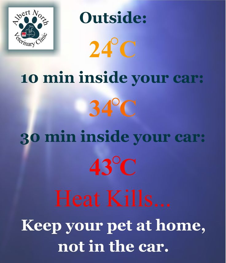 May 23 is Heat Awareness Day. Leave pets at home when out