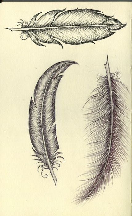 Feather sketches - for a tattoo?