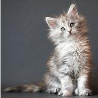 So cute....