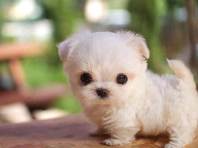 Descarga Fondos De Pantalla De Cachorros Gratis Para El Ordenador