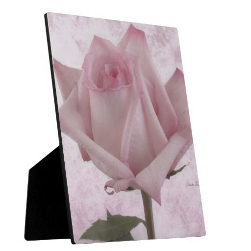 Soft Pink Rose Flower Plaques