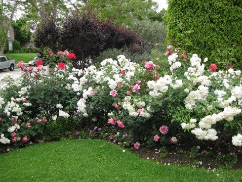 16 best images about Suzannes garden on Pinterest