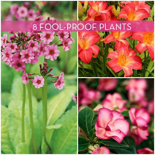8 Low-Maintenance Outdoor Plants for the Busy Gardener