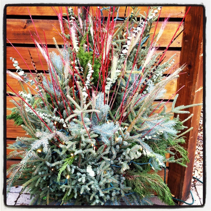 17 best images about winter decor for outdoor pots on for Garden design winter 2018