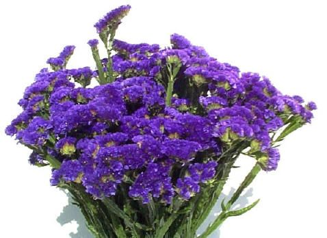 Statice Mostly Blue Purple But Sometime Small White Flower Too Or Other Colors