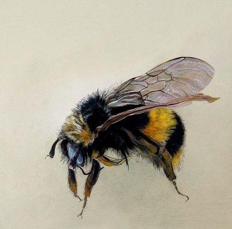 Bumblebee by O. Kidd