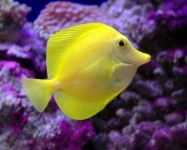 Fish.com is your online destination for everything fish, from your favorite fish products to our online fish forum. Fish.com is a subsidiary of TABcom, LLC,