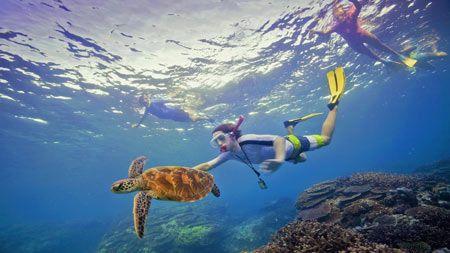 Snorkeling tours off Port Douglas