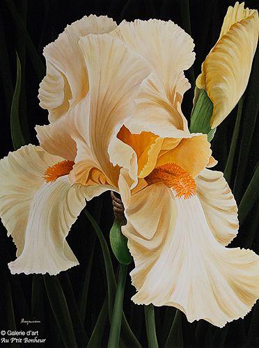 Dennis Magnusson, 'Yellow Iris', 30'' x 40'' | Galerie d'art - Au P'tit Bonheur - Art Gallery
