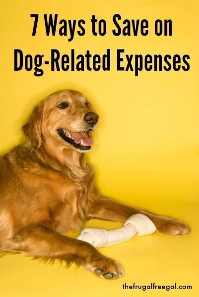 Have a dog? Read 7 Ways to Save on Dog-Related Expenses!