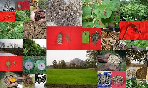 Validated, Promising and Potential Medicinal Rice Formulations for Bone Diseases (अस्थि रोग) with Diabetes mellitus Type 2 (मधुमेह) Complications (TH Group-451) from Pankaj Oudhia's Medicinal Plant Database