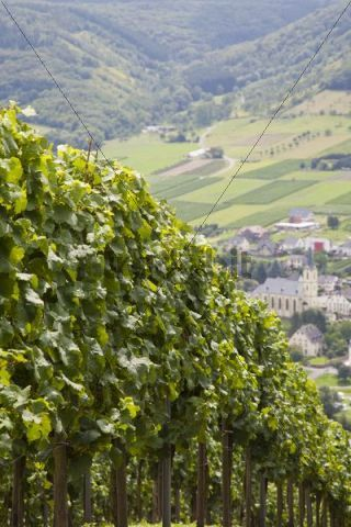 Loesnich wine village and vineyards Moselle Rhineland-Palatinate Germany Europe PublicGround