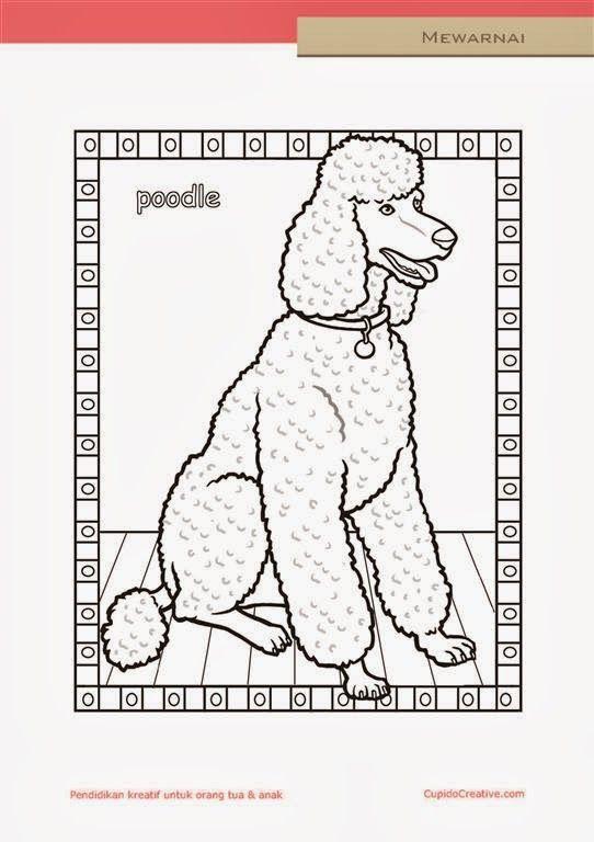 lembar kerajinan anak paud (balita/TK/SD), mewarnai anjing pudel