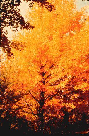 Tonewood Maple Blog | Tonewood Maple