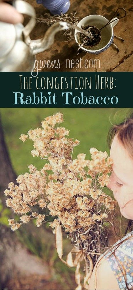 natural remedies for congestion- my favorite herb that's like herbal sudafed!