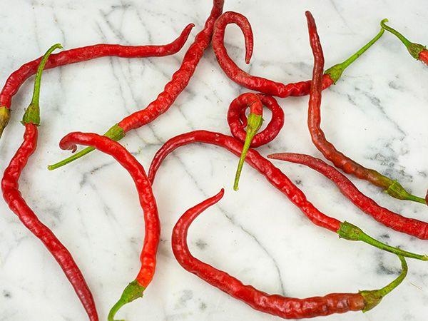 Himo Togarashi Pepper (capsicum annuum)