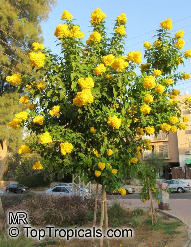 837 best ocfa approved plants images on pinterest