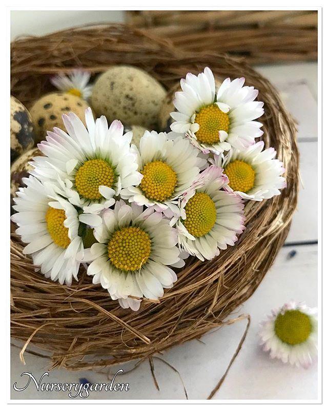 Waiting spring 🌼 happy saturday ig friends 🌼in giardino sono spuntate le prime pratoline 😍🌼 la primavera si sta facendo finalmente strada 🦋buon sabato amici di ig 🌼