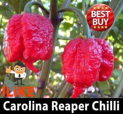 Hot-Pepper-Chilli-Seeds-Carolina-Reaper-X-20-Seeds-Hottest-in-the-world