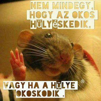 Ja,és pénzek van! :-) :-) :-) :-) Jey