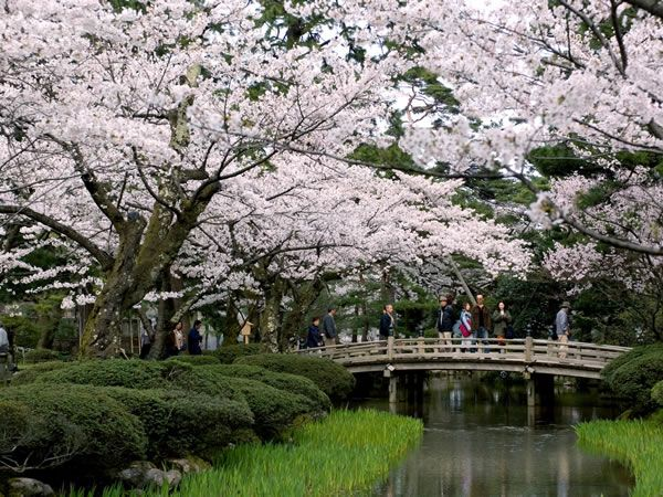 cherry blossoms bridges and streams are hallmarks of kenrokuen in kanazawa japan - Japanese Garden Cherry Blossom Bridge