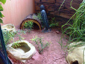 Leopard+Gecko+Habitat+Setup | Leopard Geckos the Perfect Pets | Off Beat Pets
