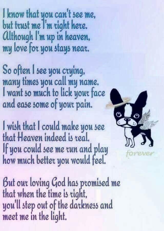 Pin By Tammy Hosey On Furbaby Heaven Boston Terrier Love Dog