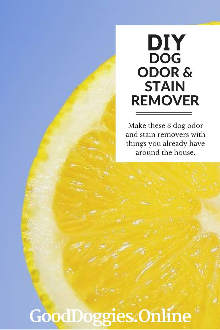 Best 25 remove dog odor ideas only on pinterest pet urine cleaner pet stain removers and natural carpet cleaners