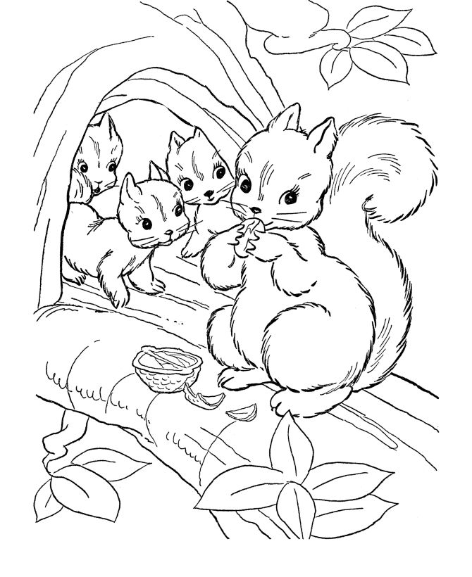 wild animal coloring pages squirrel family coloring page and kids activity sheet honkingdonkey - Animals Coloring Book