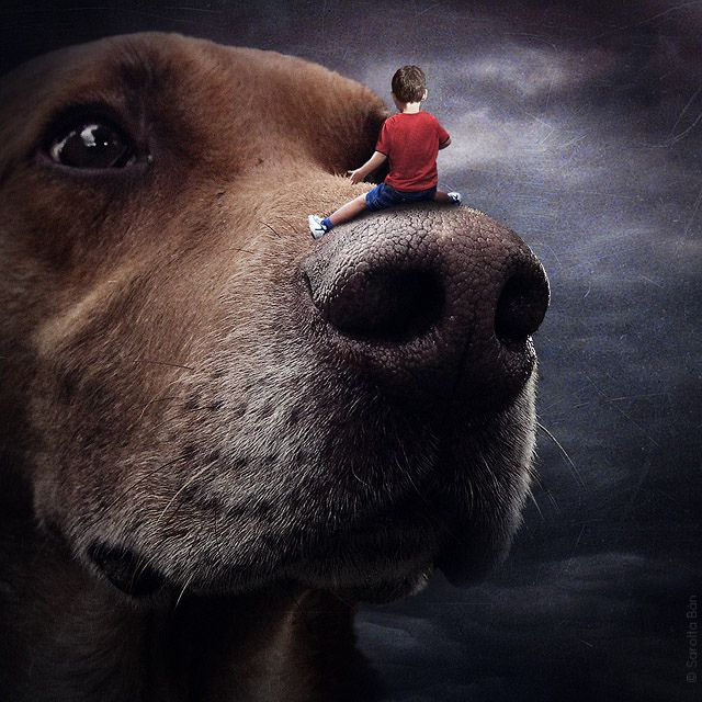 Photographer Uses Photoshop to Help Homeless Animals Find Homes