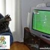 Kucing nonton Euro 2012