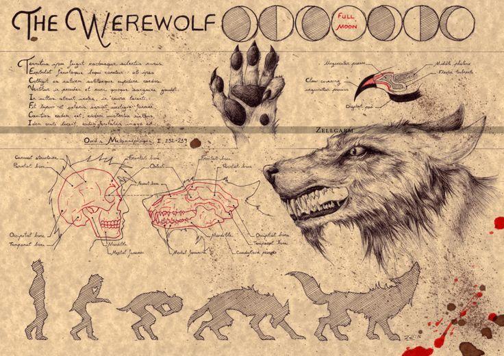 Werewolf by Zellgarm