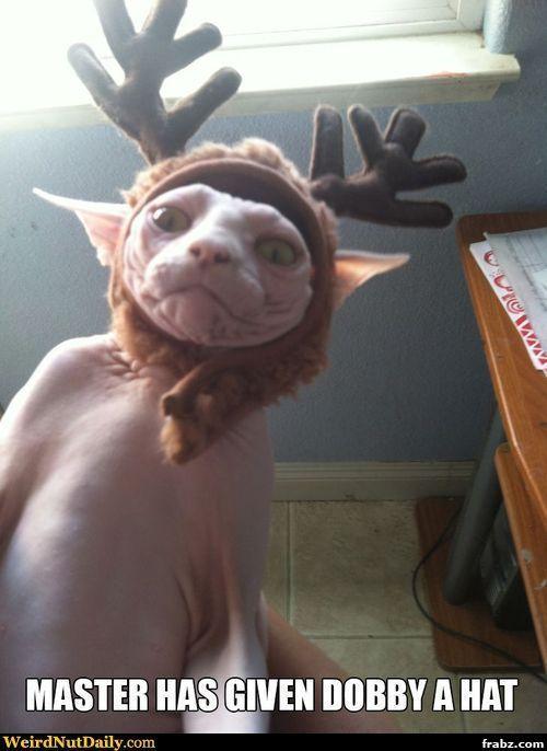 A Costume for Your Hairless Cat Meme Generator - Captionator ...