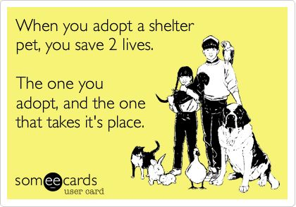 When you adopt a shelter pet, you save 2 lives. The one you adopt, and the one that takes it's place.