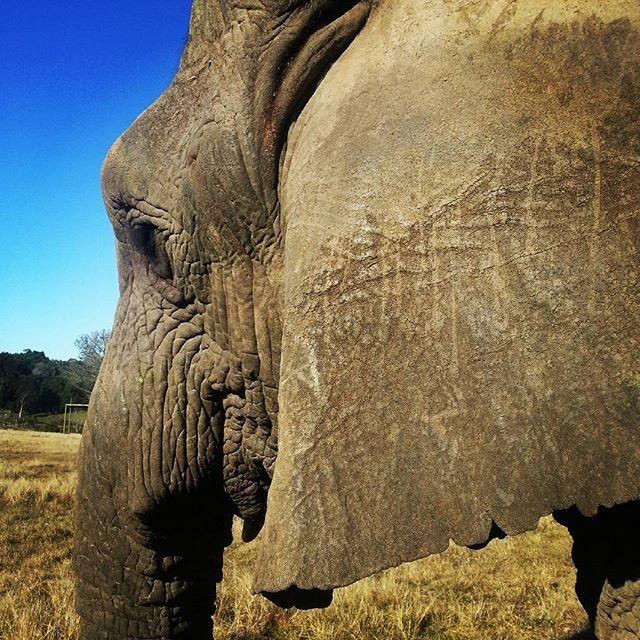 Knysna Elephant Park - great fun!