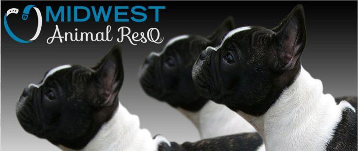 midwest animal rescue, midwest animal adoption, missouri animal rescue