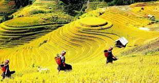 「ベトナム 田植え」の画像検索結果