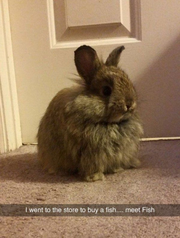 36 Of The Greatest Animal Snapchats Ever Snapped – Corrie Aronis