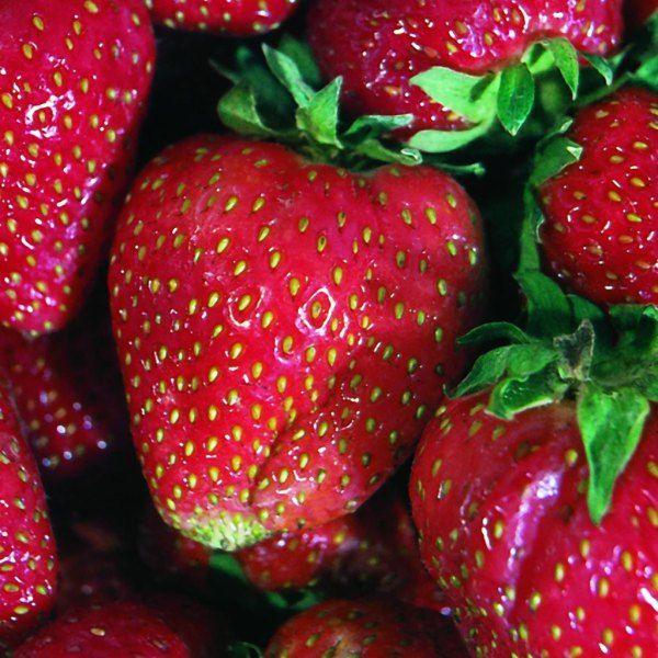 Quinalt Strawberry
