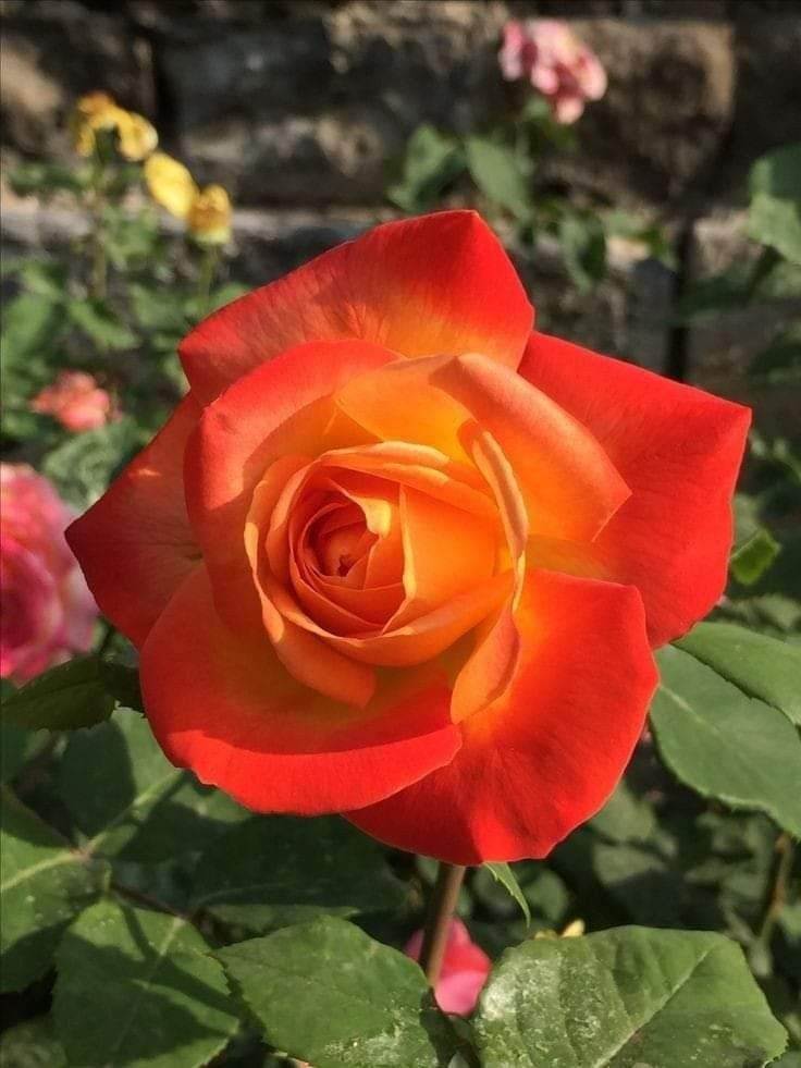 Pin By My Anh On 1 A File General In 2020 Rose Seeds Beautiful Flowers Beautiful Roses