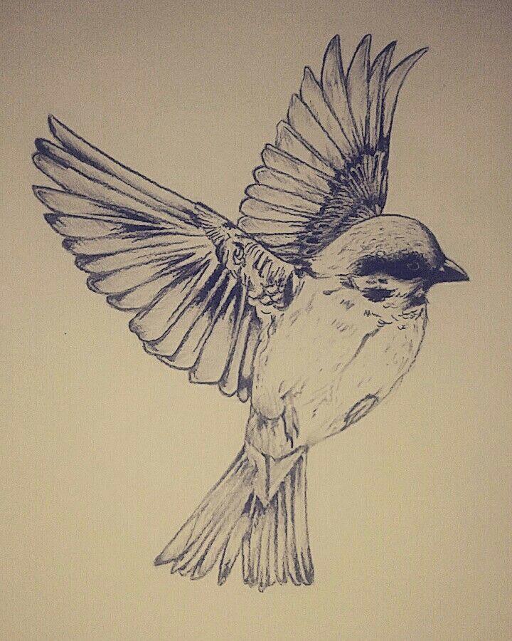 flying bird drawing pencil drawings simple sketch flight sketches animal