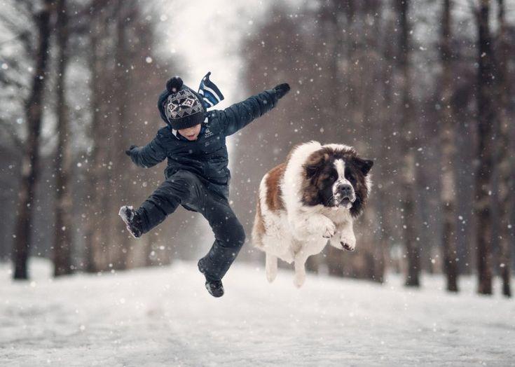 Cyril und der Moskauer Wachhund Yarik toben durch den verschneiten Wald. Man…